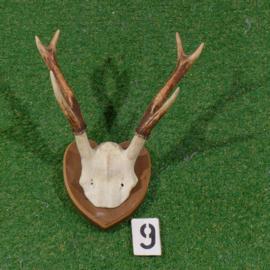 Edelhertgewei met schedel (40 x 30  cm) Samba hert