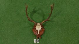 Damhertgewei met schedel (75 h x 60 br cm)