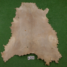Red deer parchment / rawhide (1.70 m²)