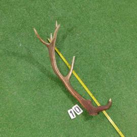 Red deer antler (70 cm)