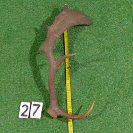 Fallow deer antler (52 cm)