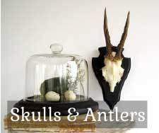 Geweien en schedels te koop