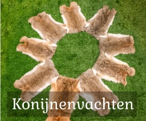 konijnenvachten te koop