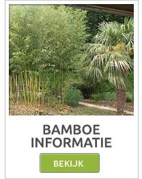 Bamboo rollen, Bamboo matten, Bamboo schermen, Bamboo schutting, bamboepalen,bamboestokken
