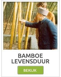 Bamboostokken, Bamboe stokken, Bamboe rollen, Bamboe matten, Bamboe schermen, Bamboe schutting,bamboepalen