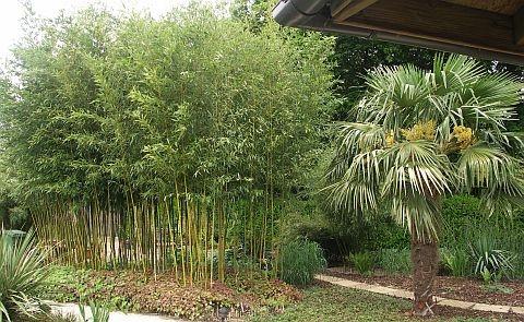 Bamboepalen, Bamboeschermen, Bamboe schutting, Bamboematten, Bamboerollen