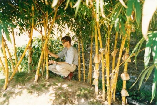 Bamboeschermen,Bamboematten,Bamboepalen,Bamboestokken,Bamboerollen,Bamboo,