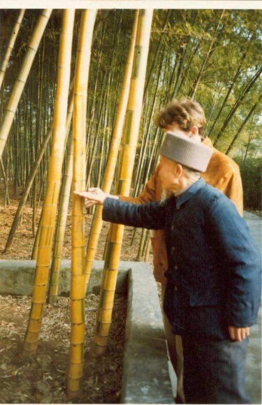 Bamboe, Bamboepaal, Bamboematen,Bamboeschermen,Bamboerol, Bamboe schutting