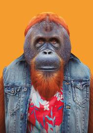 Zoo Portrait Orang Oetan