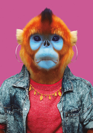 Zoo Portrait Stompneus aap