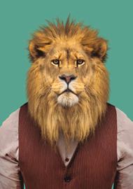 Zoo Portrait Leeuw