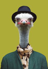 Zoo Portrait Struisvogel