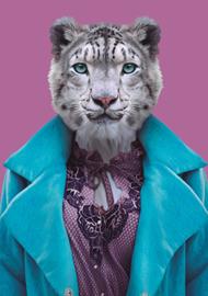 Zoo Portrait Witte tijger
