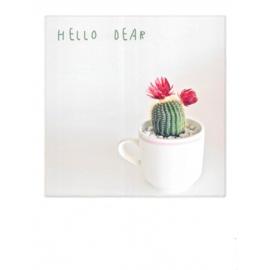 Hello Dear Cactus