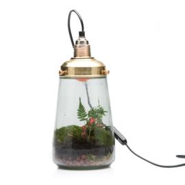 Spruitje lamp