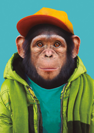 Zoo Portrait Chimpansee