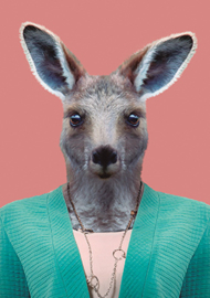 Zoo Portrait Kangaroo