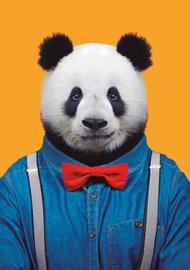 Zoo Portrait Panda