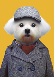 Zoo Portrait Hond
