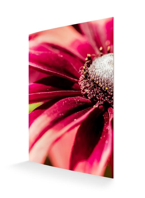 bloem rood A5