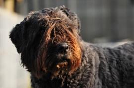 Natuurgeneeskundig consult hond in de praktijk