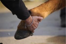 Osteopatisch consult paard excl. verplaatsingskosten
