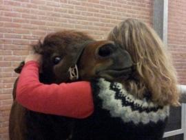 Natuurgeneeskundig consult paard excl. verplaatsingskosten