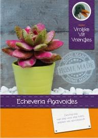 Vetplant Echeveria Agavoides