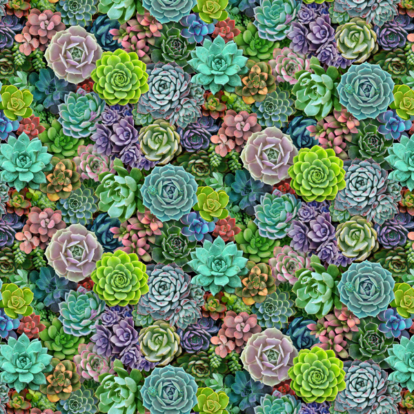 Elizabeth's Studio Small Succulents - 599MULTI
