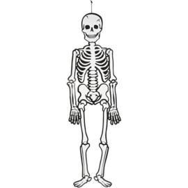 Halloween Decoratie Skelet - Hoogte 120 cm - Glow in the Dark