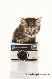 Canvas - Kitten met retro fototoestel