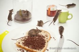 Canvas Animalities - Muizenstrontjes