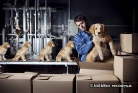 Canvas Animalities - Puppyfabriek