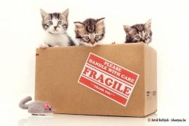 Canvas - Kittens in doos