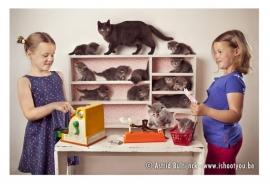 Canvas Animalities - Kittenshop