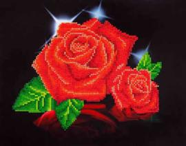 Red Rose Sparkling