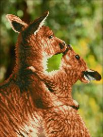 Kussende Kangaroes