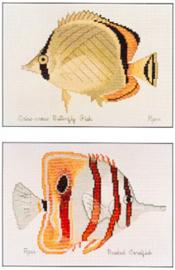 Criss-cross & Beaked Coralfish