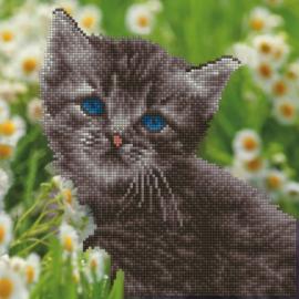 Diamond Art - Kitten