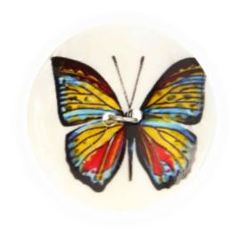 Paarlmoerknoop Vlinder