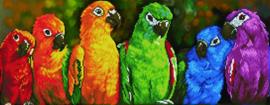 Regenboog Papegaaien