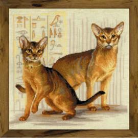 Abessijnse Katten