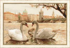 Zwanen in Praag