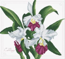 Boeket van orchideeën