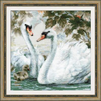 Witte Zwanen met jong
