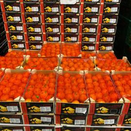 Clementine per kistje (40 stuks - 2,3 kg.)