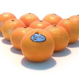 Mandarijn Clementine Blad per 10 stuks