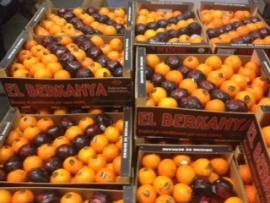 Mandarijn Clementine per 10 stuks