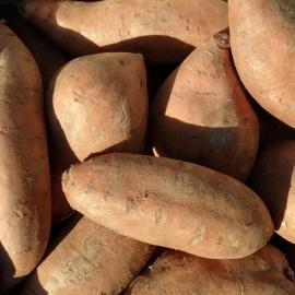 Zoete Aardappel per 500 gram