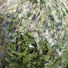 Boerenkool Gewassen per 300 gram